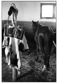 Jean Marquis – Horse, Mata, Hungary 1954