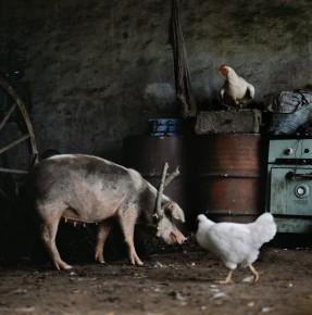 Alessandra Sanguinetti – Barn scene, Buenos Aires, Argentina, 2002