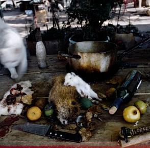 Alessandra Sanguinetti – Still life, Buenos Aires, Argentina, 2004